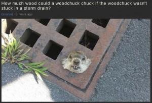Woodchuck storm drain