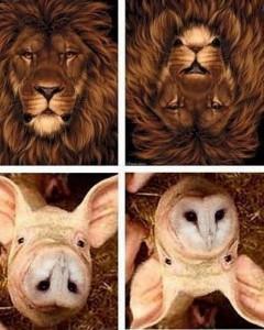 animals upsidedown