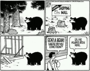 bear alwaysbeenhere
