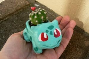bulba cactus