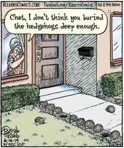 buried hedgehogs
