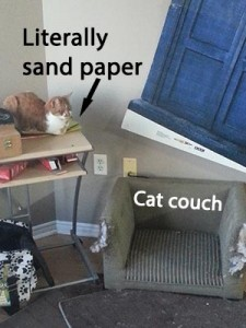 cat bed v sandpaper