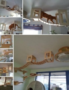 cat catwalk