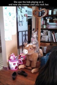cat rocking
