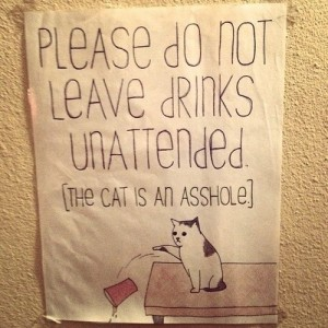 cat v unattended drinks
