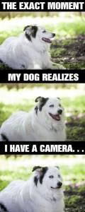 dog camera discovery