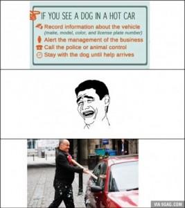 dog rescue steps
