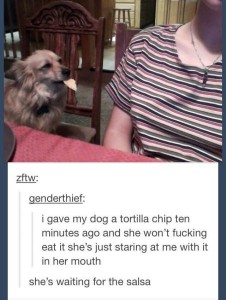 dog tortilla chip