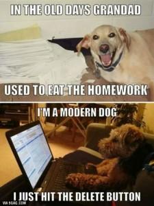 dog v homework