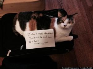 feminism cat