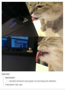 gamer cat slut