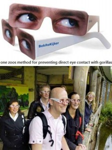 gorilla stare glasses