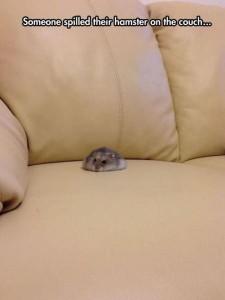 hamster spill