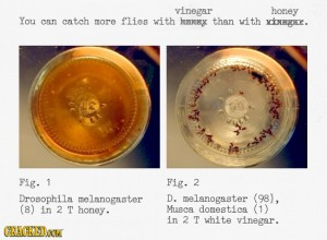 honey v vinegar