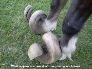hoof unclipped