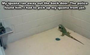 iguana in jail
