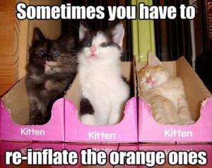 kitten reinflate