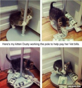 kitty poledance