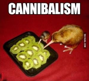 kiwi cannibalism