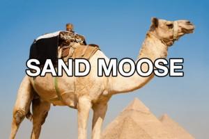 newnames camel
