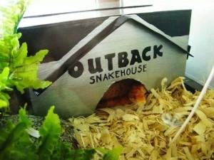 snakehouse