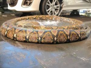 snakepool