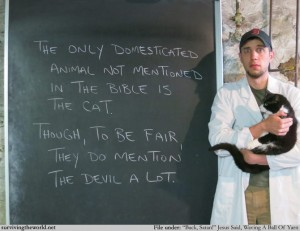 stw cats and bible