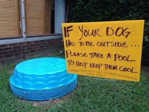take a pool for your dog