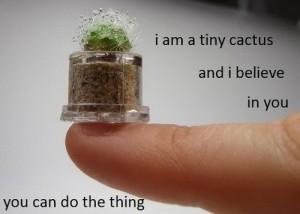 tinycactus