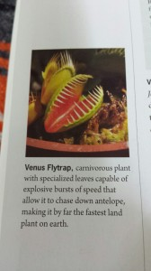 venus flytrap descrip